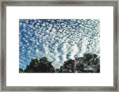 Altocumulus Mackeral Cloud Formation  Framed Print by Carol F Austin