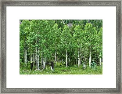 Framed Print featuring the photograph Alvarado Summer by Marie Leslie