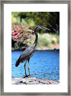 Always Looking To Eat Framed Print by Terri Thompson