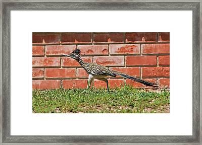 Always On The Hunt Framed Print by Linda Brody