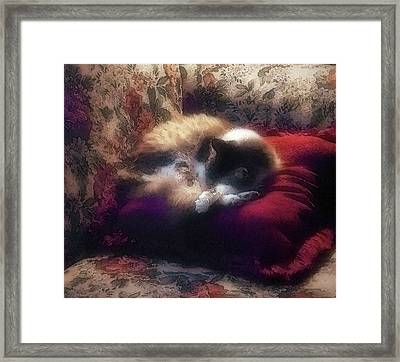 Framed Print featuring the photograph Always On Vacation by Kate Word