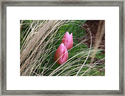 Always Together Framed Print by Sergey Nassyrov