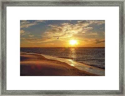 Always Under My Wing Framed Print by Betsy Knapp