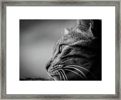 Always Watching Framed Print