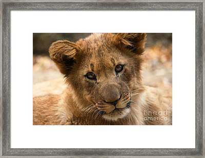 Framed Print featuring the photograph Am I Cute? by Christine Sponchia