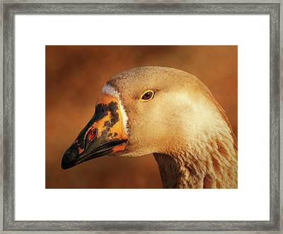 Am I Still Beautiful Framed Print by Wim Lanclus