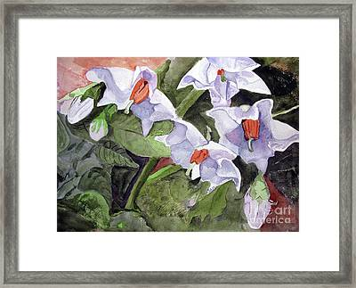Amanda's Blue Potato Flowers Framed Print
