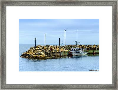 Amanda's Pride At Feltzen South  Framed Print