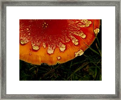 Amanita Edgework Framed Print