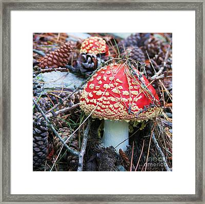 Framed Print featuring the photograph Amanita Mushroom by Michele Penner