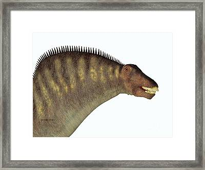 Amargasaurus Dinosaur Head Framed Print by Corey Ford