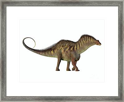 Amargasaurus Side Profile Framed Print by Corey Ford