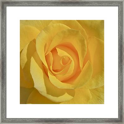 Amarillo Framed Print by Gwyn Newcombe