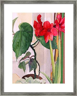 Amaryllis And Begonia Framed Print by Nancy Watson