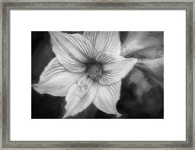 Amaryllis And Tree Frog Painted Bw Framed Print by Rich Franco