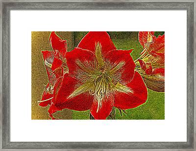 Amaryllis Art Series Framed Print by Geraldine Scull