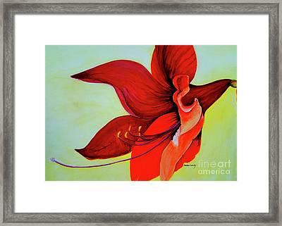 Amaryllis Blossom Framed Print