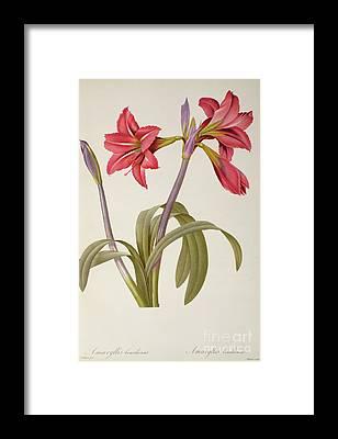 Flower Bouquet Framed Prints