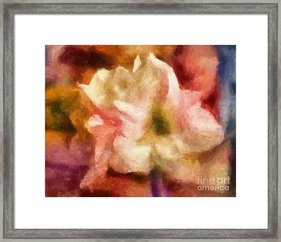 Amaryllis Colori Framed Print by Lutz Baar