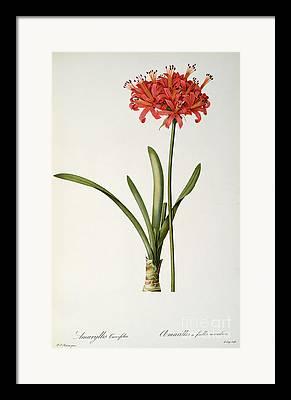Curvifolia Framed Prints