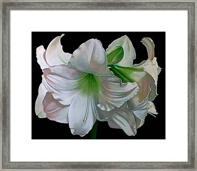 Amaryllis Framed Print by Doug Strickland