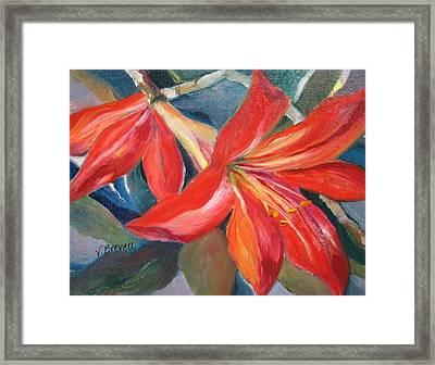 Amaryllis In Spring Framed Print
