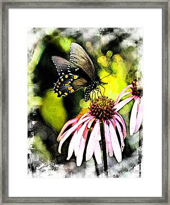 Amazing Butterfly Watercolor 2 Framed Print by Marty Koch