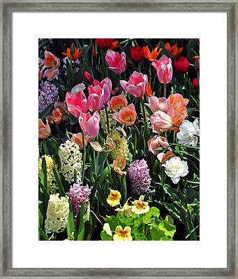 Amazing Flowers Framed Print by Marty Koch