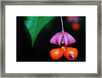 Amazing Forest Flowers Framed Print by Yuri Hope