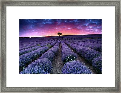 Amazing Lavender Field With A Tree Framed Print by Evgeni Dinev