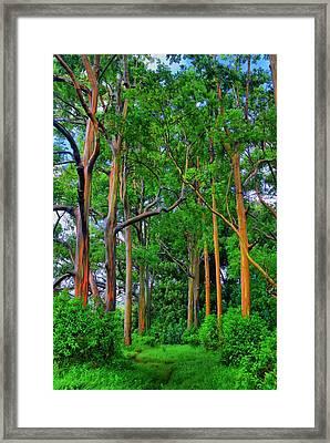 Amazing Rainbow Eucalyptus Framed Print