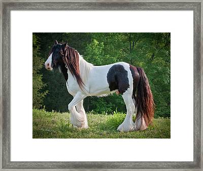 Amazing Stallion Django Framed Print