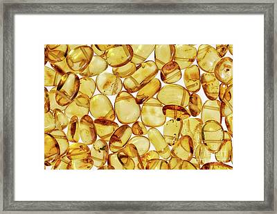 Amber #2h2a0902 Framed Print