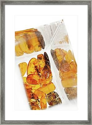 Amber #5022 Framed Print by Andrey Godyaykin