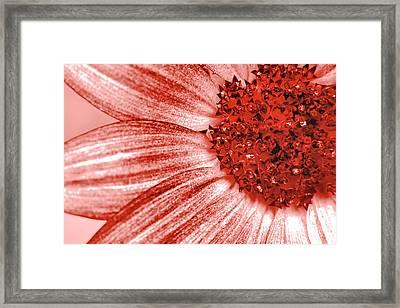 Amber Macro Petals Framed Print by Sean Davey