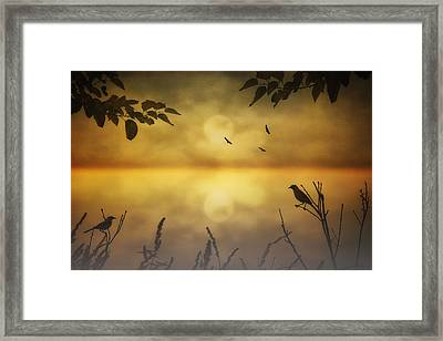 Amber Morning Framed Print
