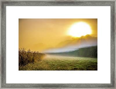 Amber Morning Framed Print