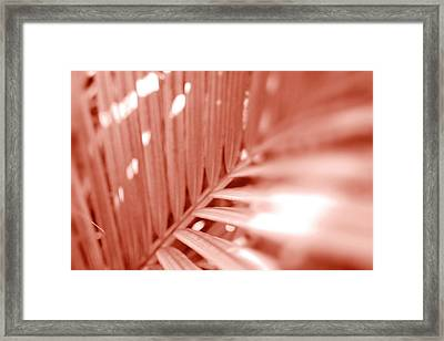 Amber Palm Frond Framed Print