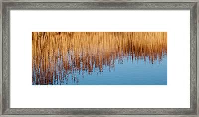 Amber Rush - Framed Print