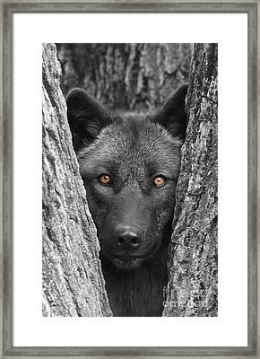 Amber Framed Print