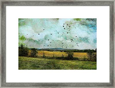 Amber Waves Of Grain Framed Print by Jan Amiss Photography