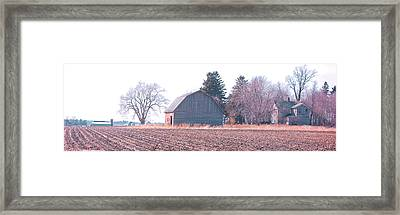 Amber Weeds Framed Print by Jame Hayes