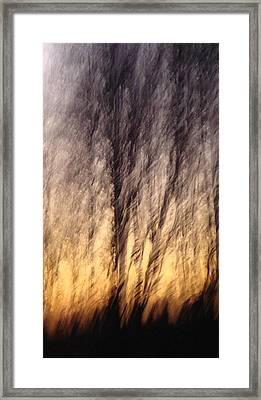 Ambience Framed Print by Melody Dawn Germain