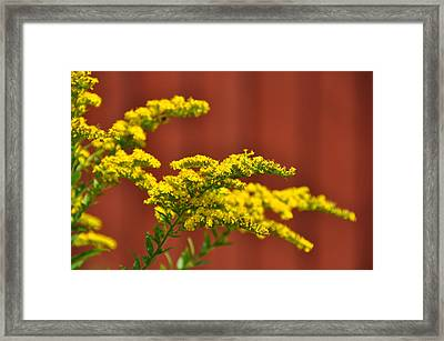 Ambrosia Framed Print by JAMART Photography