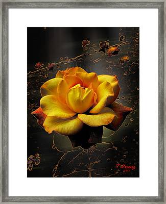 Ambrosia Framed Print by Tony Marquez