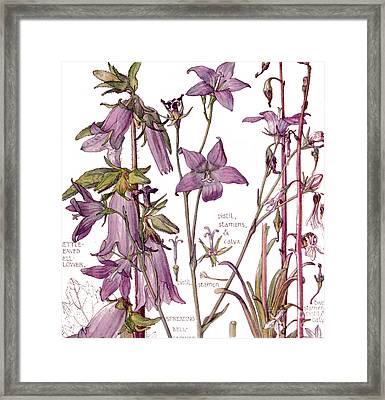 Ambrosia Vii Framed Print