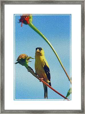 America Goldfinch On Gayfeather Framed Print