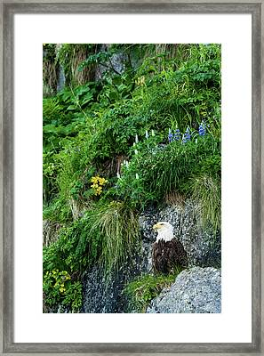 America The Beautiful Framed Print by Emily Bristor
