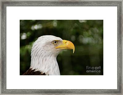 America The Great Framed Print