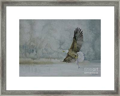 American Bald Eagle Framed Print